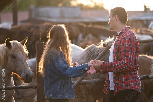 Fotografia, Obraz A beautiful couple is stroking a white horse at sunset in summer