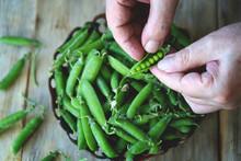 Selective Focus. Macro. Fresh Green Peas In Hands.