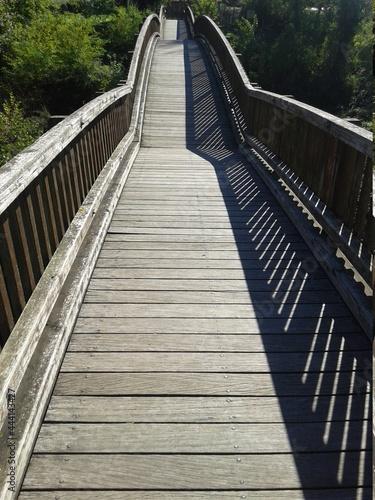 Wallpaper Mural Wooden Footbridge In Forest