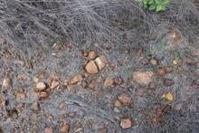 Pedras Caminhos