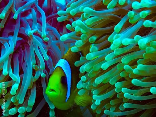Fototapeta fish in aquarium