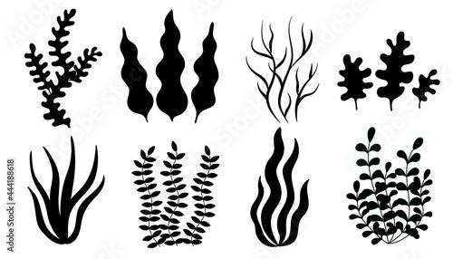 Stampa su Tela set of algae, black silt. simple vector