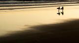 Fototapeta Kawa jest smaczna - Silhouette People On Beach Against Sky During Sunset