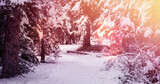 Image of winter scenery landscape with light spots and fir trees covered in snow