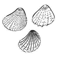 Seashells Hand Drawn Set. Sketch Design Elements