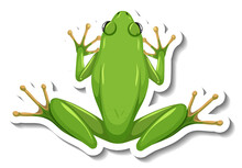 A Sticker Template With Top View Of Green Frog Isolated