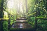 Fototapeta Las - path in the forest