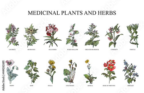 Photo Medicinal plants and herbs collection - vintage illustration from Larousse du xx