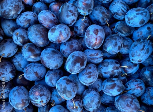 Fotografie, Obraz Plum Blue Free, harvested from a farmer's garden. Ogranic fruits
