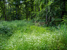 Beautiful Blooming Meadow With Wild Flowers In Sunny Green Summertime Mountain Forest Stock Photography In Low Mountain Range Elm - Germany.