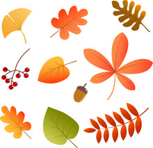 Vector Autumn Leaves Set - Red, Brown, Otange , Yellow And Green Illustration