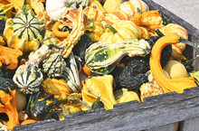 Colorful Squash And Gourds