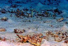 A Picture Of Spotted Garden Eel