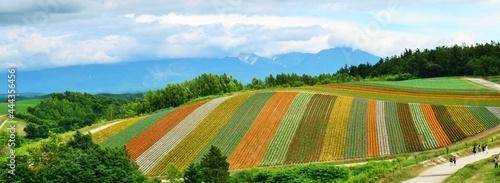 Fotografia 北海道の夏の四季彩の丘、美瑛町の夏のお花畑、日本