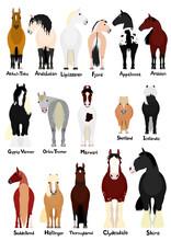 16 Popular Horse Breeds Bundle