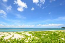 沖縄 美しい海 癒やし