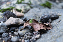 Close-up Of Pile Of River Stones And Little Butterfly On Dry Leaves