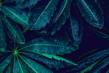 Closeup Nature View Of Green Leaf Texture And Water Drop, Dark Wallpaper Concept, Nature Background, Tropical Leaf