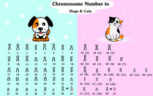Chromosome Number In Dog And Cat. Dog And Cat Karyotype Diagram.
