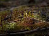 Krople wody na mchu w lesie po deszczu
