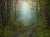 Mgła w wiosennym lesie