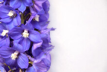 Purple, Beautiful Flowers On A Gray Background, In Soft Focus