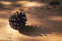 Pinecone On A Wooden Surface In The Afternoon Sun