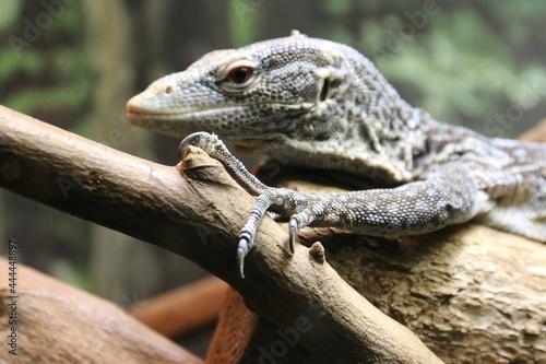 気持ち悪い爬虫類 Fototapeta