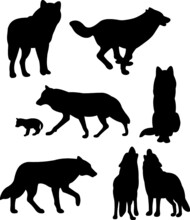 Set Of Silhouettes Of Wolf
