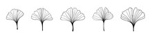 Ginkgo Biloba Black Outline In Sketch Style. Isolated On White Background. Sketch Illustration. Abstract Art Nature . Vector Hand Drawing Line Art