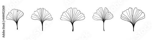 Fotografija Ginkgo biloba black outline in sketch style