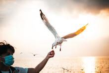 White Seagull With Red Mouths And Feet, Eating Food In People's Hands, With Sky And Sea In The Evening Sunset Background, To Animal And Nature Concept.