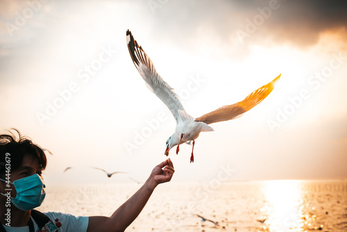 Fotografia White seagull With red mouths and feet, eating food in people's hands, with sky and sea in the evening sunset background, to animal and nature concept