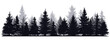 Pine trees silhouettes. Evergreen coniferous forest silhouette, nature spruce tree park view vector illustration. Coniferous woods silhouette