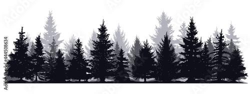 Canvas Print Pine trees silhouettes