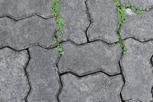 Image Of A Textured Block Floor With Plants Growing Out Of Some Cracks. Outdoor Floor.