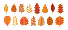 Autumn Colorful Leaves Set, Hand-drawing. Fall. Forest Design Elements. Vector Illustration Isolated On White Background