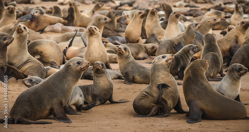 Foto Seals at the Cape Cross Seal Reserve on the Skeleton Coast in Namibia