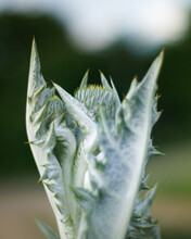 Closeup Shot Of A Fuzzy Green Plant