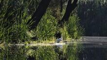 Garza Pescadora