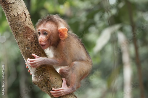 Fototapeta Cute monkeys and where they life in nature