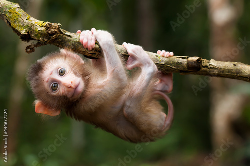 Obraz na plátne Cute monkeys and where they life in nature