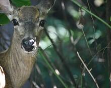Lovely Deer In The Woods.