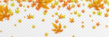 Vector Leaf Fall On An Isolated Transparent Background. Autumn, The Leaves Are Falling From The Trees. Leaves Png.