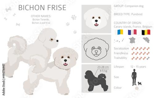 Canvas Print Bichon frise clipart. Different coat colors and poses set