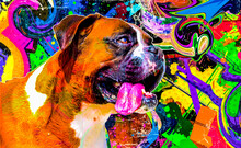Boxer Dog Head With Creative Colorful Abstract Elements On Background