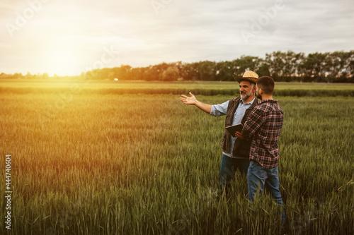 Fotomural farmers talking on wheat field
