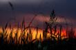 Pflanzen-Silhouetten im Gegenlicht vom Sonnenuntergang