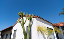Residential Building House With Cactus Plants On Blue Sky Background, Building