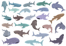 Whale Shark Icons Set Cartoon Vector. Animal Fish. Exotic Mammal